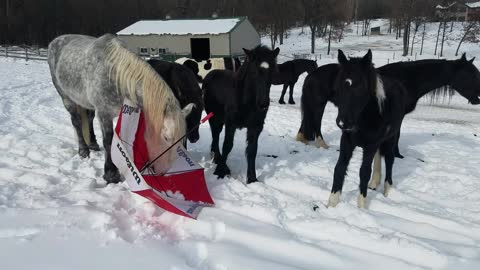 Brave horse shows foals they don't need to fear umbrellas