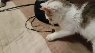 HTC Vive headset tutorial for cats  - Video