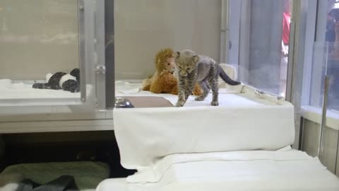 Dog and cheetah are still best friends years after meeting as babies