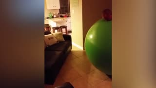 Man And Giant Balloon Become One - Video