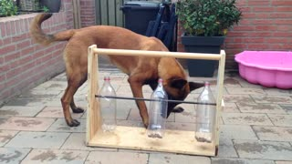Dog figures out tricky bottle puzzle for treats - Video