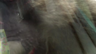 Knowsley Safari Park Funny Baboon Attack - Video