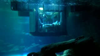 A room with a view… of sharks! - Video