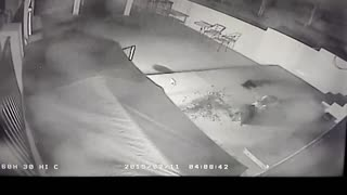 Mountain Lion Attacking Doberman - Video