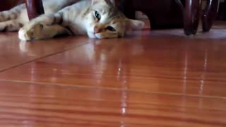 Cat sleepy and hungry - Video
