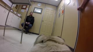 What do pets think about going to the vet? - Video