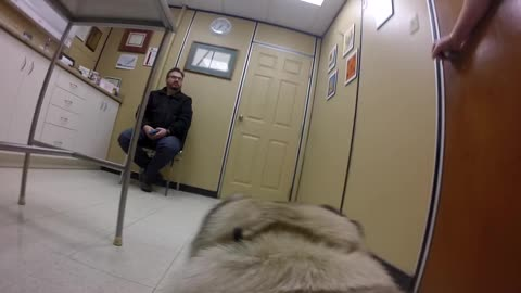 What do pets think about going to the vet?