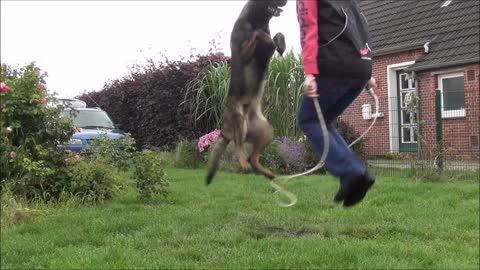 rope jumping with a dog