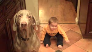 Baby and dog practice new trick simultaneously - Video