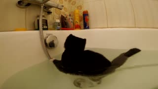 Confused Kitten Stuck In Bathtub - Video