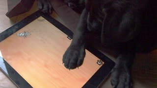 Tech-loving puppy dominates tablet game - Video