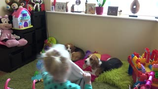 Toddler prepares her cute puppy and dog to sleep