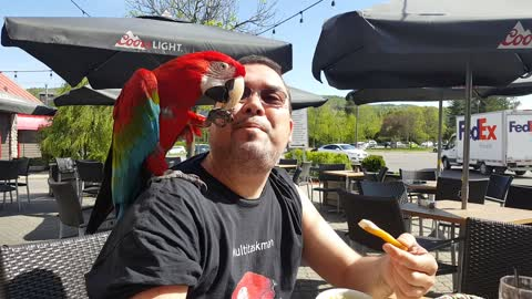 Parrot and owner enjoy french fries at local restaurant