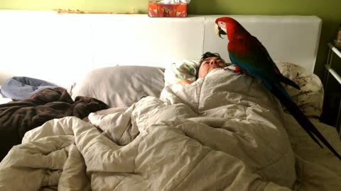 Parrot wakes up owner every morning for kisses