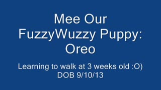 Sweet Little OREO - Video
