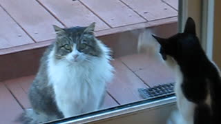 Neighbor Cat Annoys Me - Video