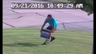 Clinton, Trump Yard Sign Thieves Keep Stealing Signs - Video