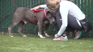 Crying dog at shelter finds new home - Video
