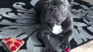 dog moments 01 FB - Video