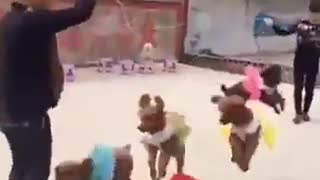 dogs jump rope - Video