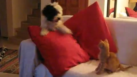 Brave kitten hilariously puts dog in check