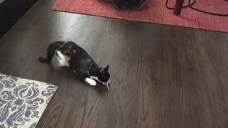 Kitten goes bonkers for turkey feather - Video