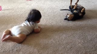 Baby and Chiweenie dog interact for the first time - Video