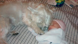 Cautious dog meets baby for the first time