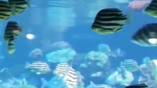 Just Keep Swimming, Swimming - Video