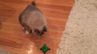 Fluffy kitty plays with butterfly