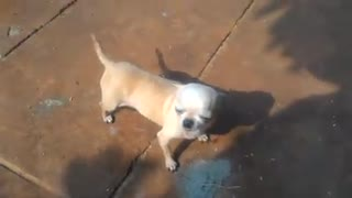 BEST FUNNY DOGS COMPILATION