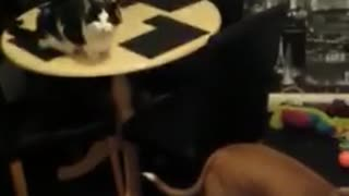 """Cat, kitten and puppy all learn to """"sit"""" for treat"""