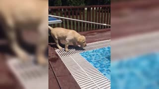 Cute puppies first interaction with the pool