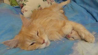 Mother cat comforts kitten