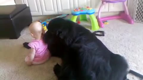 Giant Newfoundland Expresses His Love For Cute Little Girl In The Most Adorable Way