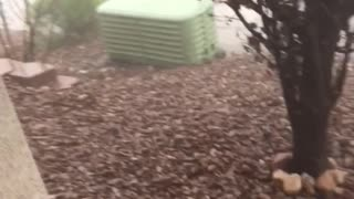 Strong Winds Causing Chaos in Neighborhood - Video