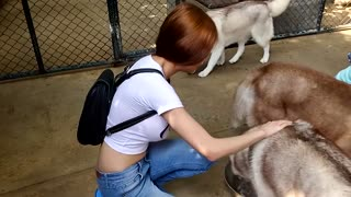 Husky Cafe in Bangkok is heaven on Earth - Video