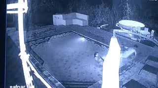 Crocodile Attacks Couple in Private Swimming Pool - Video