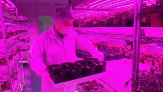 Singapore to use state-of-the-art farming tech to produce more veggies - Video