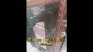 Dog Can Lock and Unlock Front Door - Video