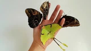 A Handful of Butterflies - Video