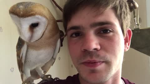 Tito the owl shares kisses with his owner