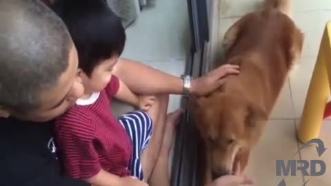 Dog Playing Baby Its just not a pet its a good friend