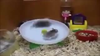 Funny Animals Part 2 - Video