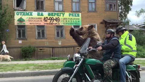 Bear rides motorcycle and waves to people