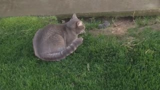 Cat vs. Gopher