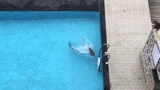 Monkey Antics in the Pool