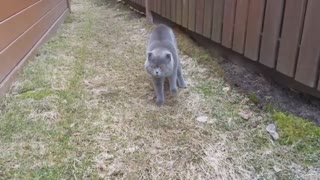Cute Cat Arguing With Her Human. Incredible Video - Video