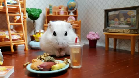 Happy hamster enjoys tasty after school snack