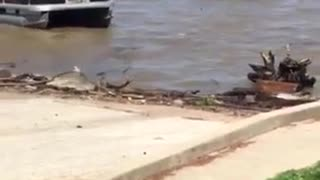 Boating Ramp Backup Fail - Video
